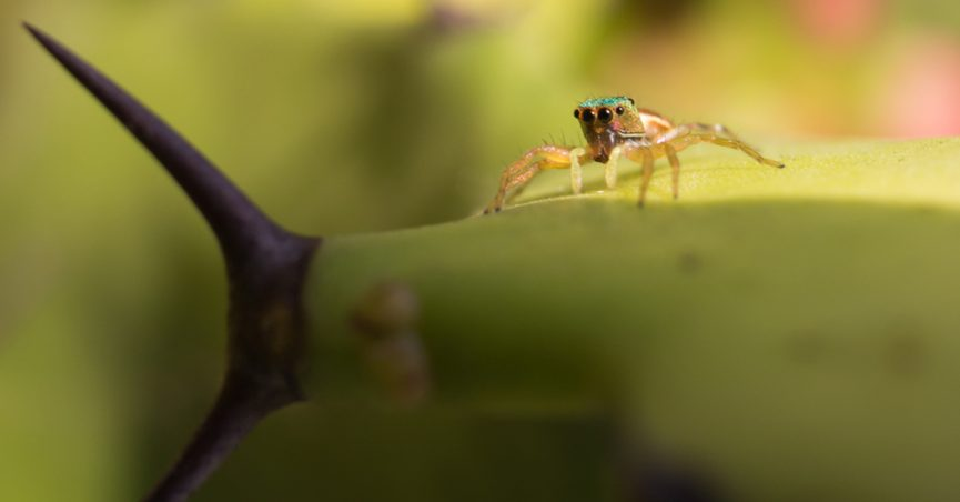 Tiny spider on a cactus