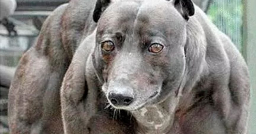 Is This the 'Strongest Dog in the World'?