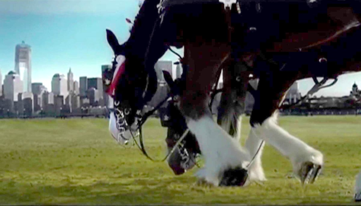 Budweiser 9 11 Clydesdale Tribute Commercial