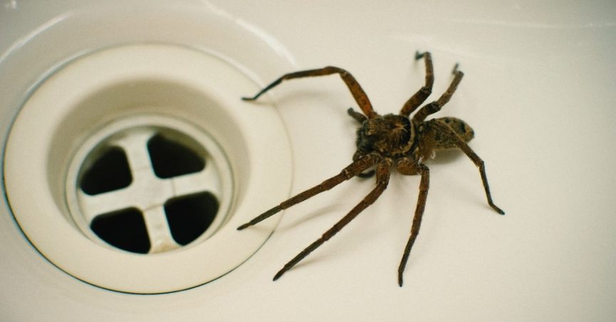 Do People Swallow Eight Spiders Per Year?