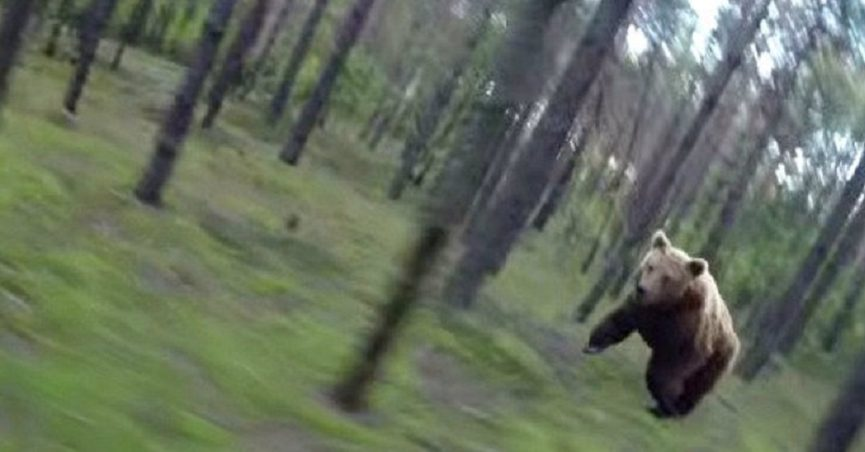 Did a GoPro Capture a Bear Chasing a Biker Through the Woods?