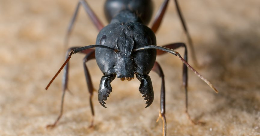 Can a Bug Crawl in Your Ear and into Your Brain?