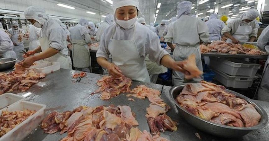 Is China Re-Shipping Processed Chickens Back to the U S ?