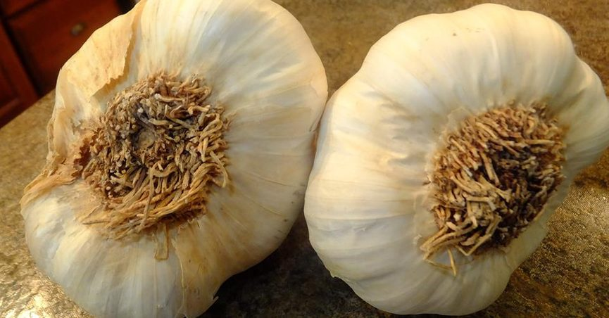 How to Identify Chinese-Grown Garlic