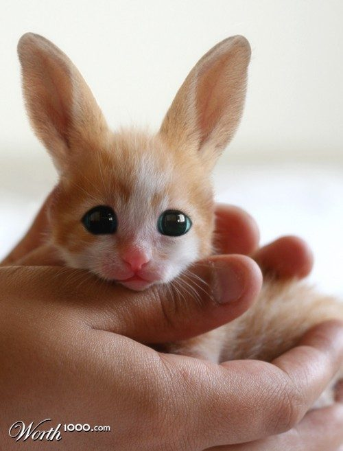 fennec hare photoshop