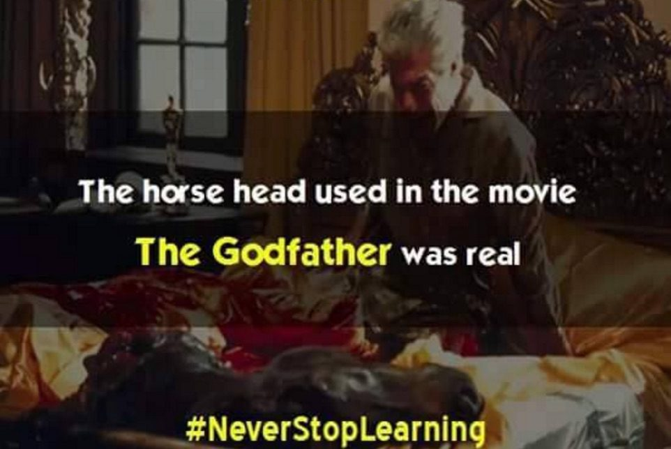 Fact Check Was The Horse S Head In The Godfather Real