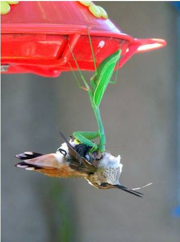 facebook hummingbird
