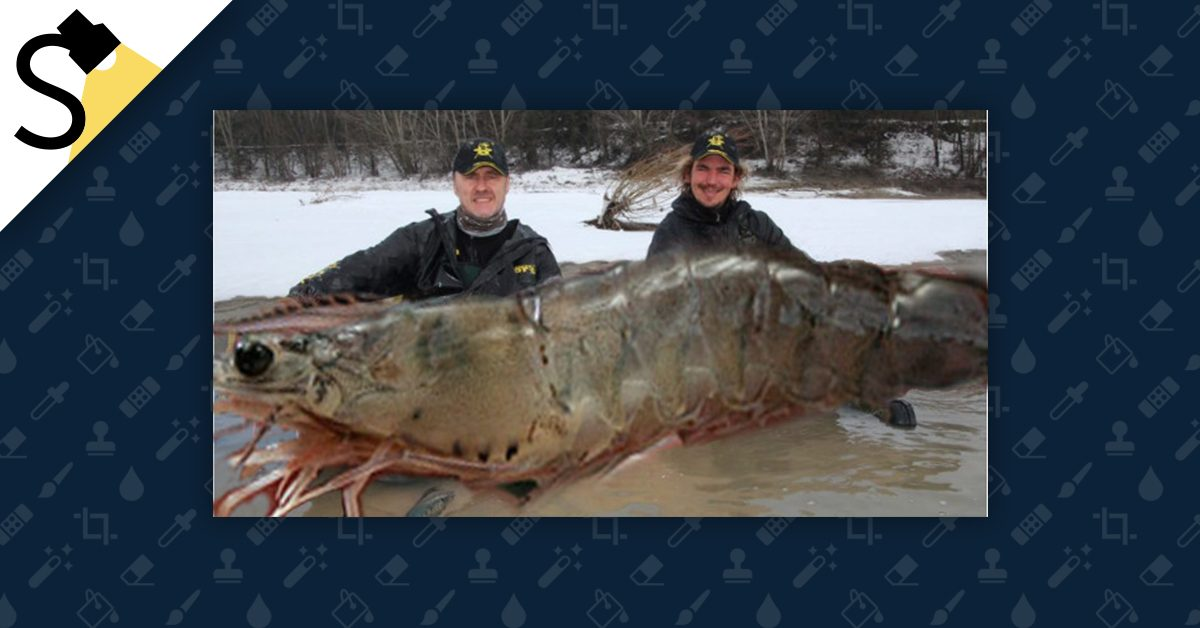 FACT CHECK: Did Canadian Fishermen Catch a 320-Pound Shrimp?