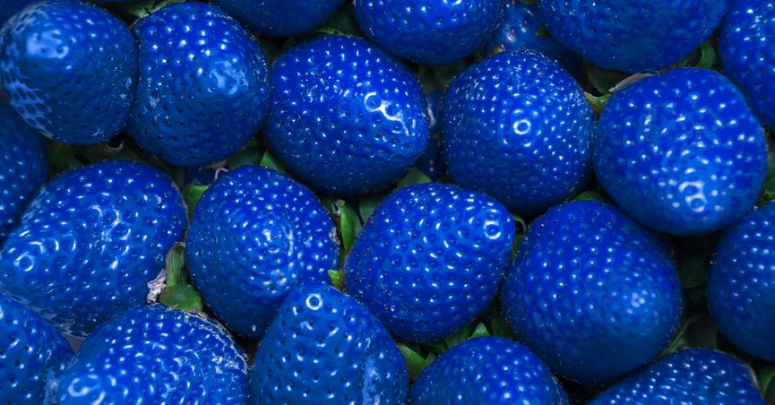 Photomanipulated image of blue strawberries