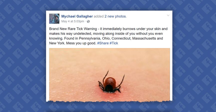 fact check is there a new rare tick that burrows under your skin