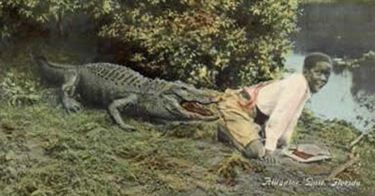 Pilgrim in the Land of Alligators: More Stories about Real Florida (Florida History and Culture)