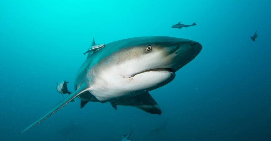 FACT CHECK: Was a Bull Shark Spotted in Kentucky Lake?