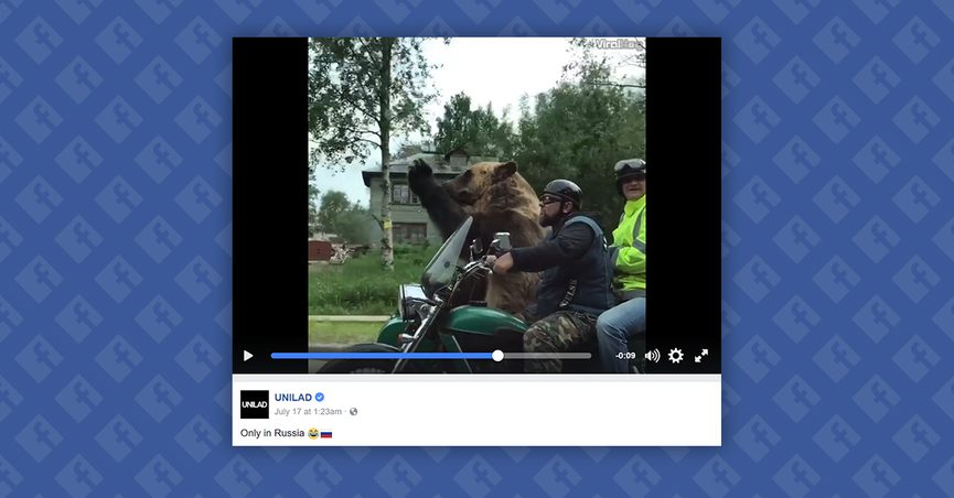 Screen grab from video of Tim the bear riding a motorcycle