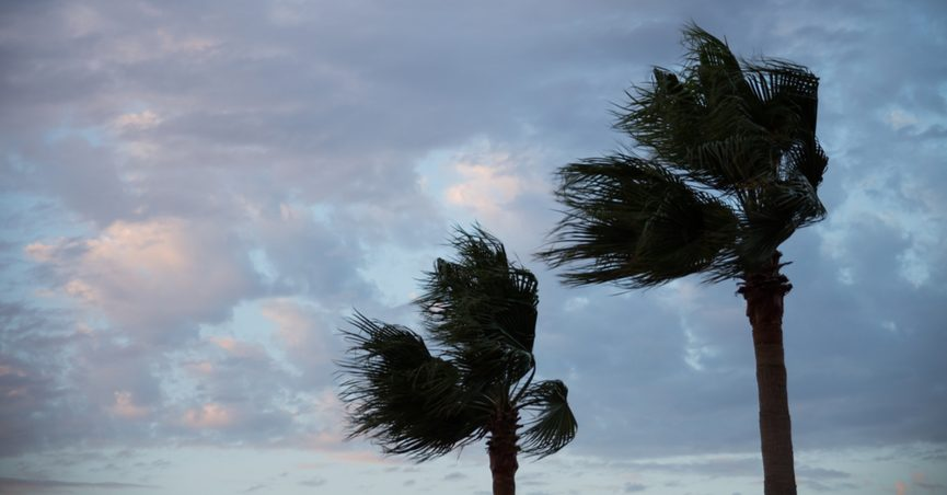 Two palm trees blowing in the wind