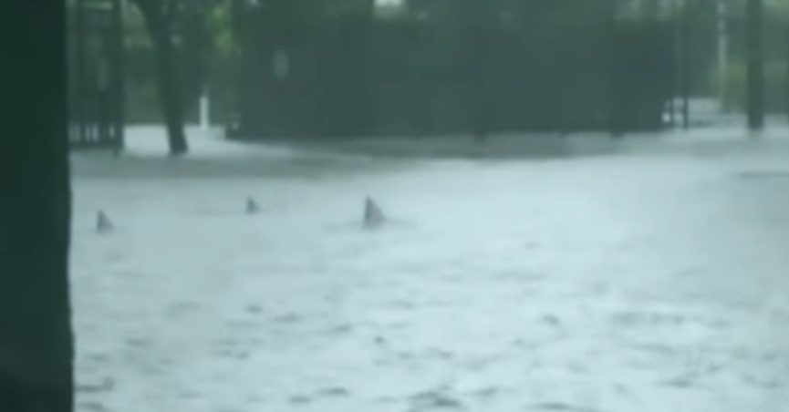 """Screengrab from video showing """"sharks"""" swimming through Miami"""