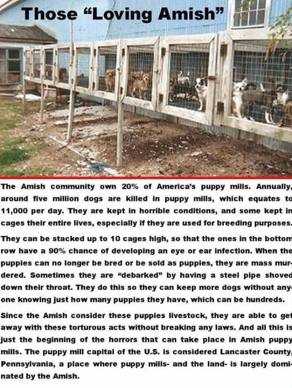 FACT CHECK: Does the Amish Community Own 20 Percent of