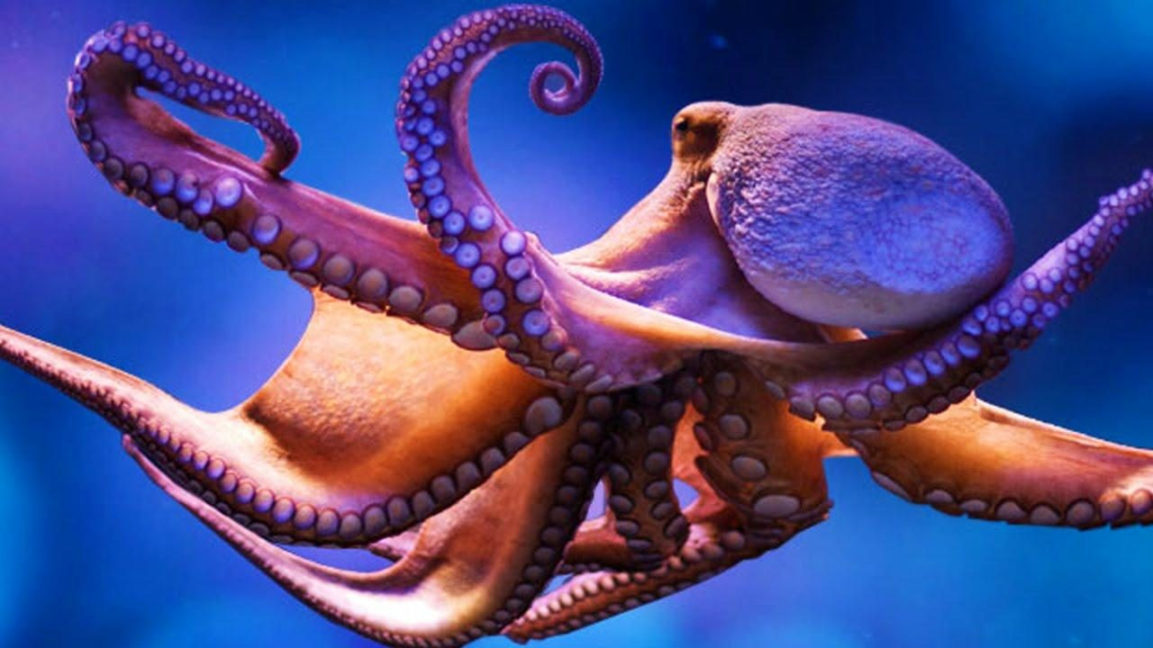 FACT CHECK: Does Octopus DNA Come from Space?