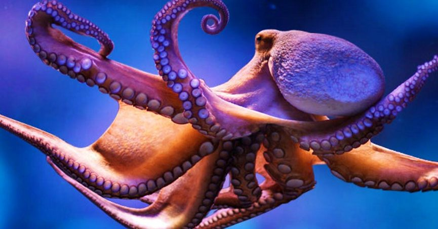 Fact Check Did An Octopus Maul A San Diego Zoo Employee S Genitals