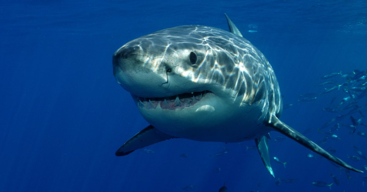 Photo of the year national geographic 2020 shark