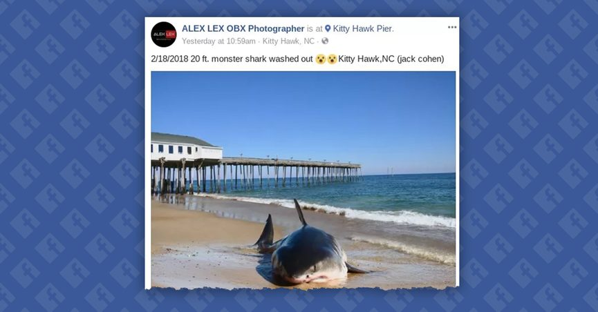 FACT CHECK: Did a Huge Shark Wash Up on a North Carolina Beach?