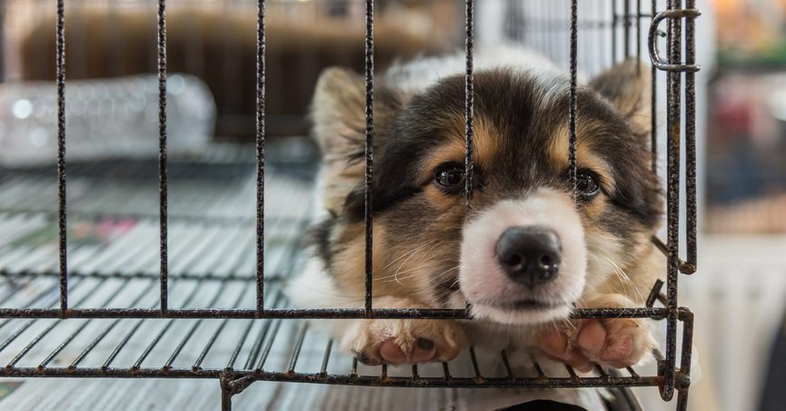 Did President Donald Trump End Public Access to 'Puppy Mill