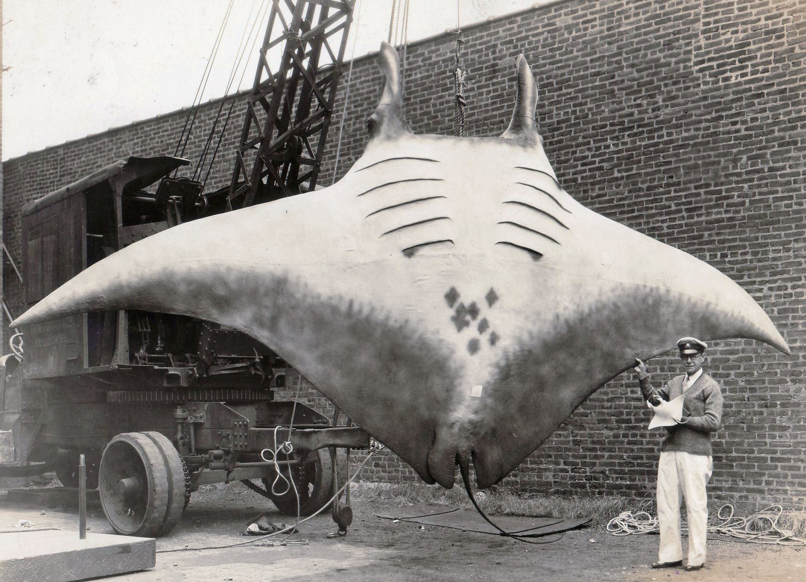 Does a Photograph Show a Real Giant Manta Ray?