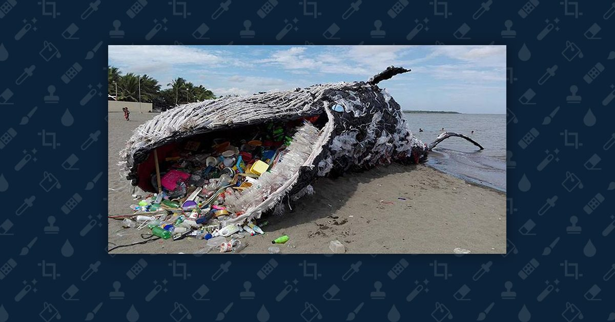 Did A Sperm Whale Die After Swallowing 64 Pounds Of Plastic Debris