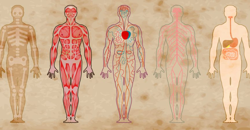 Atlas of Human Anatomy. a simplified diagram of the different systems of human body. old antique style