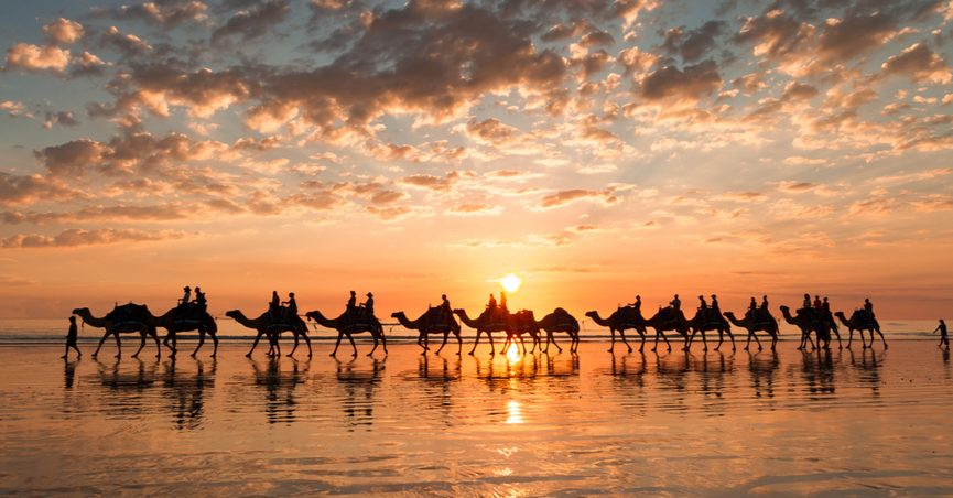 A line of camels strutting down a beach in silhouette.