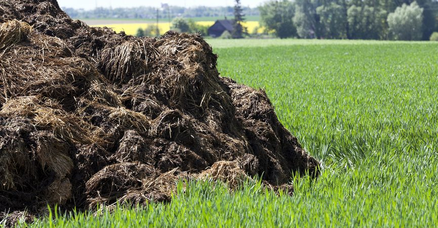 A pile of manure on a green lawn.