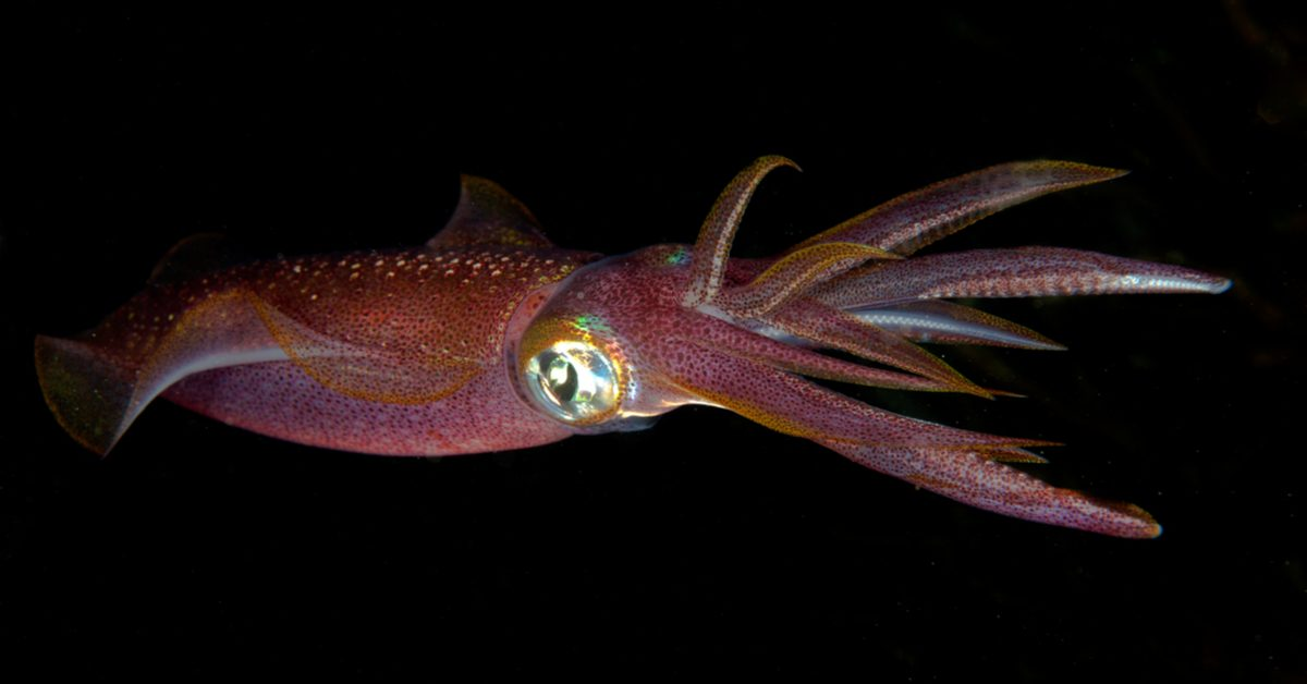 Image result for squid