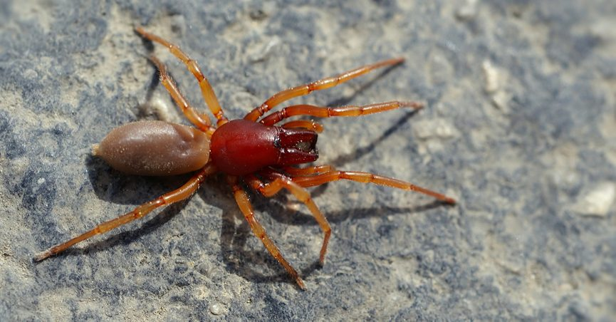 Did a 'New Deadly Spider' Species Kill Several People in the