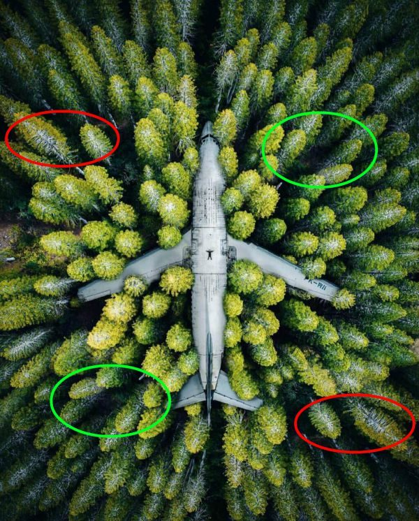 Is This Image an Aerial View of an Airplane Abandoned in a Forest?