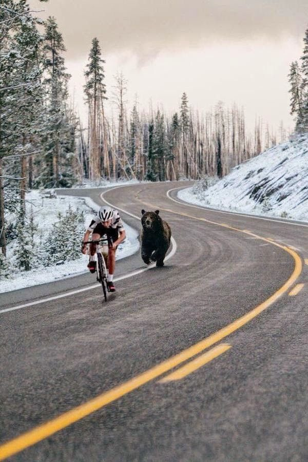 Does This Photograph Capture a Bear Chasing a Cyclist? | Snopes.com