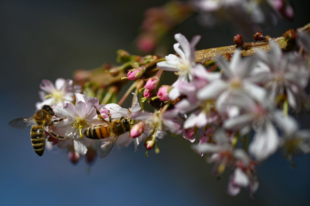 FACT CHECK: Is Home Depot Selling Plants Treated with Bee-Harming Neonicotinoid Pesticides?