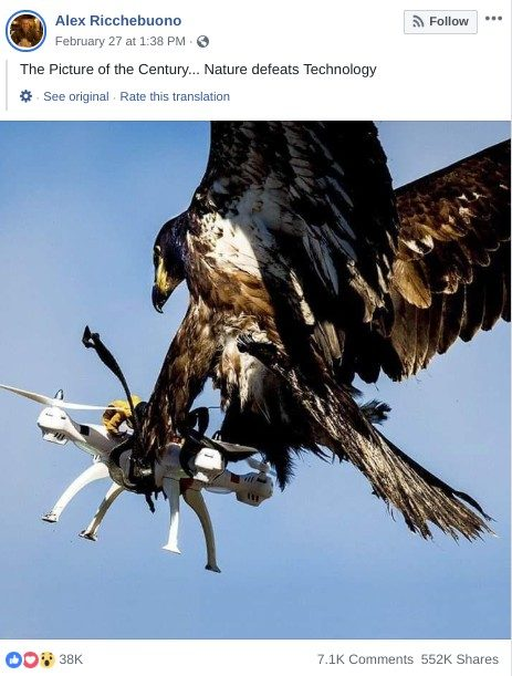 Is This an Eagle Catching a Drone?