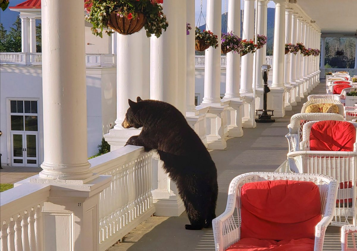 Photo Shows Black Bear Relaxing at Hotel
