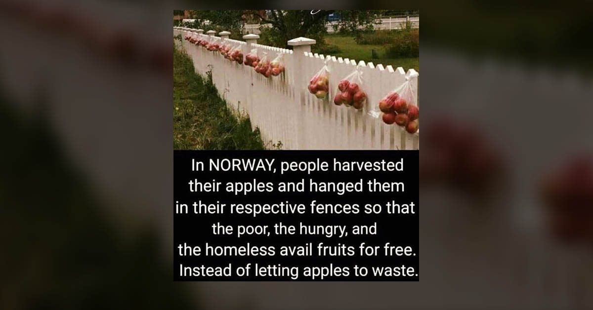 Are Surplus Apples Hung for Free From Fences in Norway to Feed the Hungry?