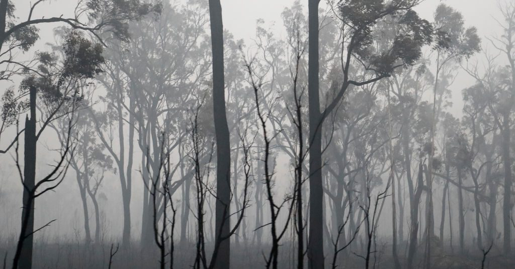 Were 'Nearly 200' People Arrested for Deliberately Starting Australia Bushfires?