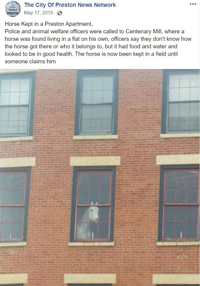 Is This Horse Living In A Third Floor Apartment
