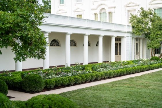 Did Melania Trump Dig Up The Rose Garden At The White House