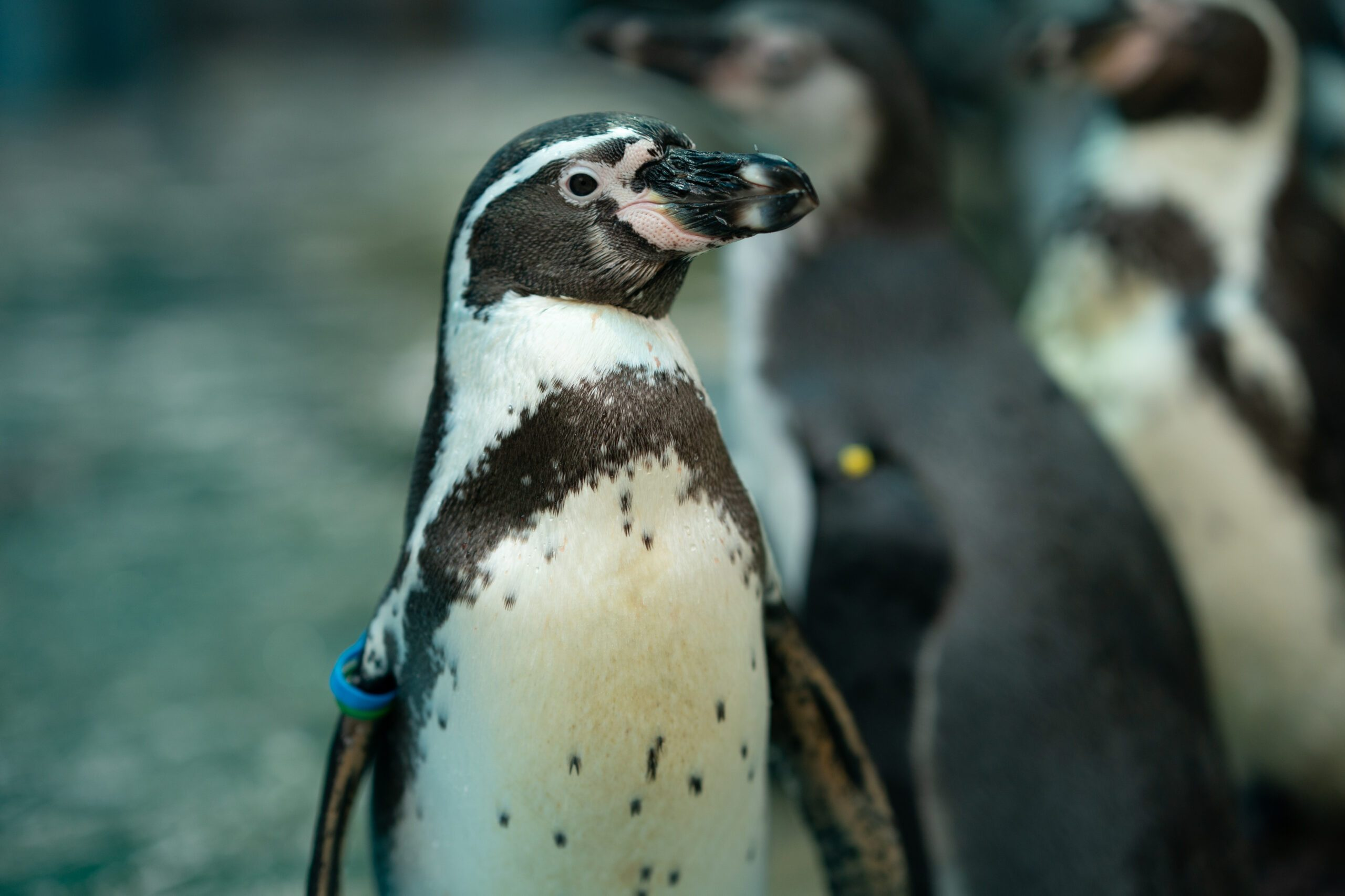 UK Thief Who Sold Stolen Penguins on Facebook Sent to Prison