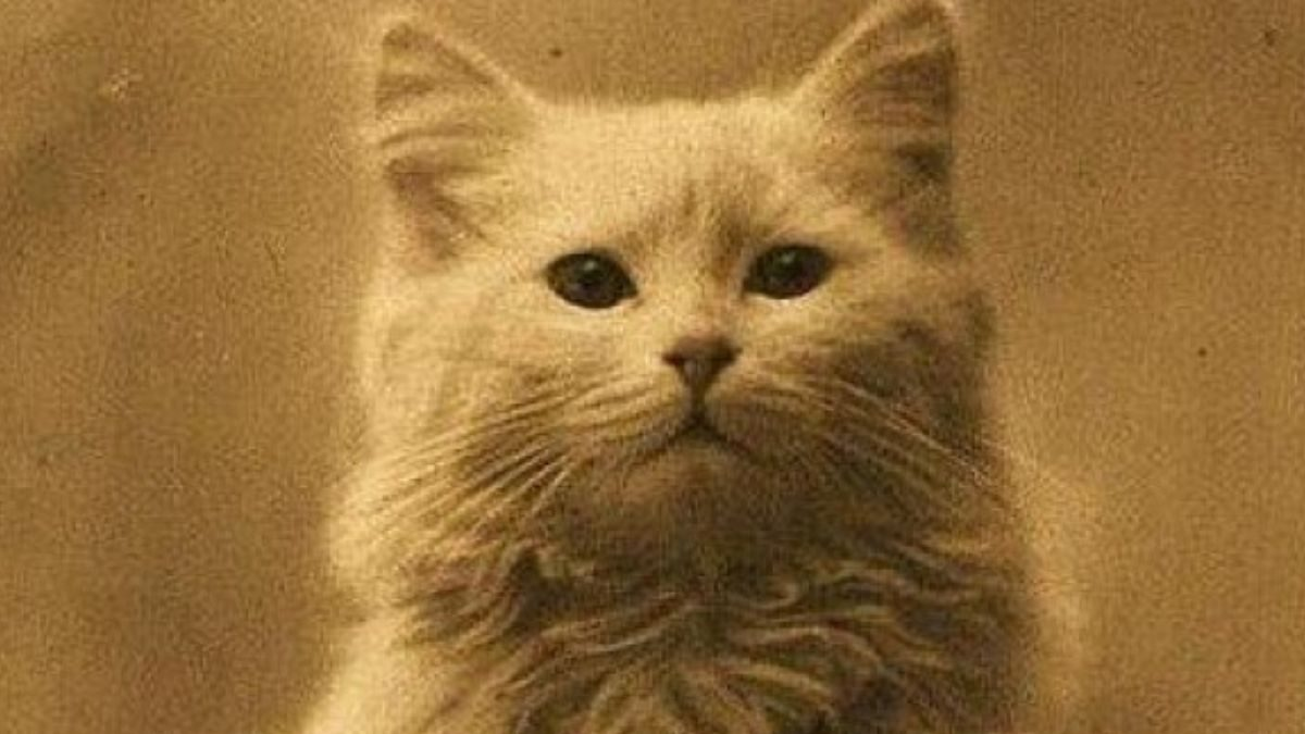 Is This the World's Oldest Cat Photo?
