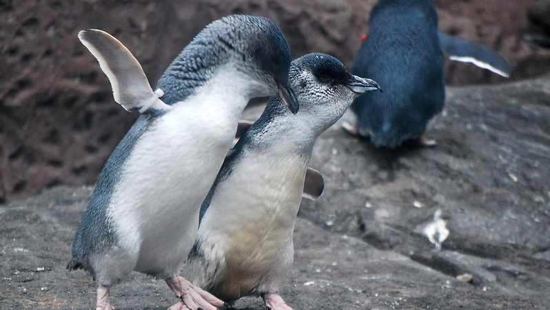 Does A Photo Show Widowed Penguins Consoling Each Other Snopes Com