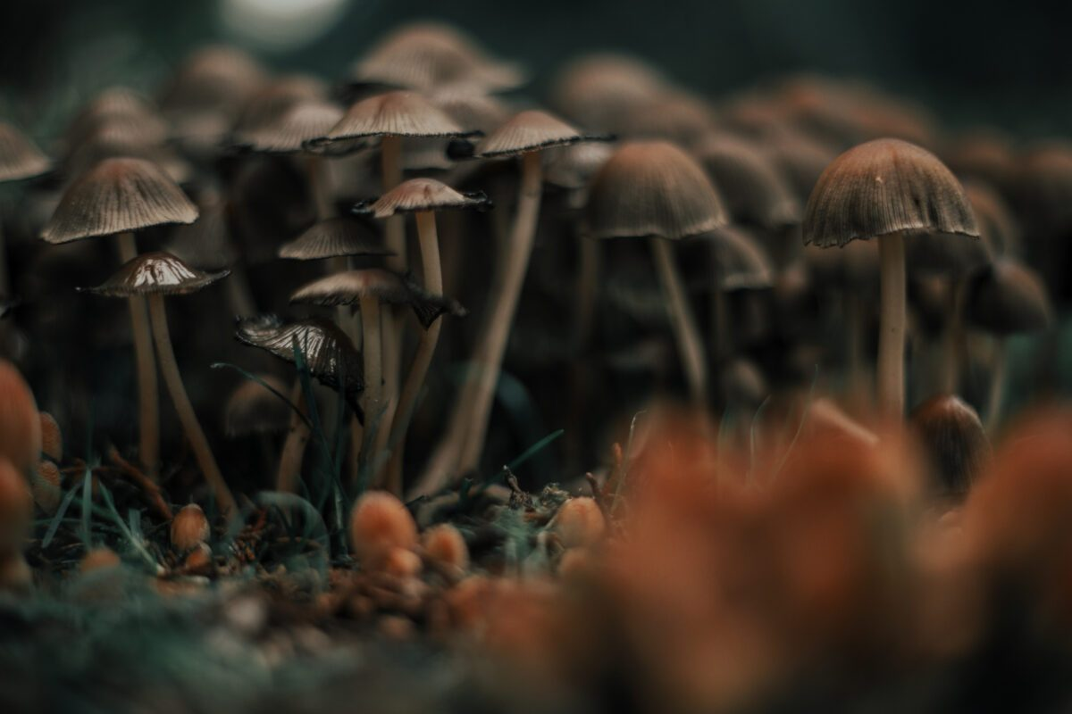 Did a Man Suffer Organ Failure After Injecting Psychedelic Mushrooms? - snopes