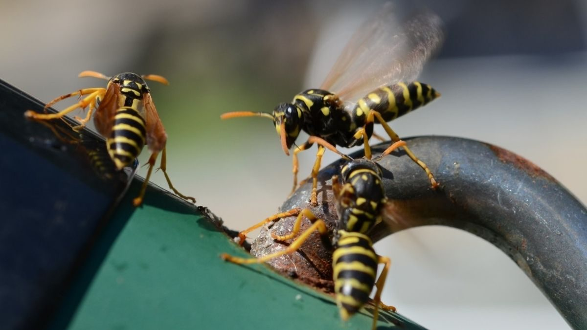 Do Dryer Sheets Repel Wasps From Mailboxes? - snopes