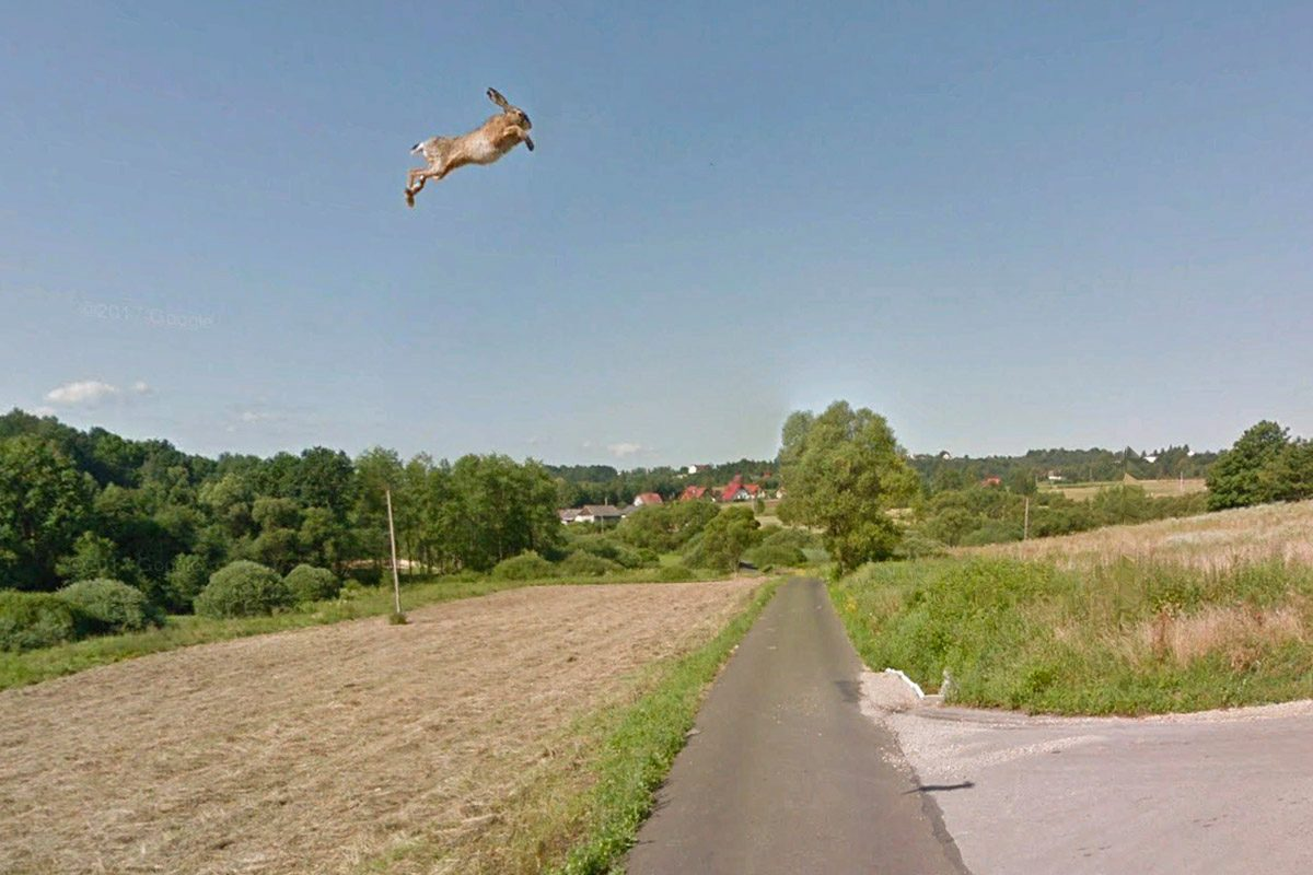 A TikTok video showed a hare or super rabbit launching into the air after being hit by a Google Maps Street View car in Poland also on Google Earth.