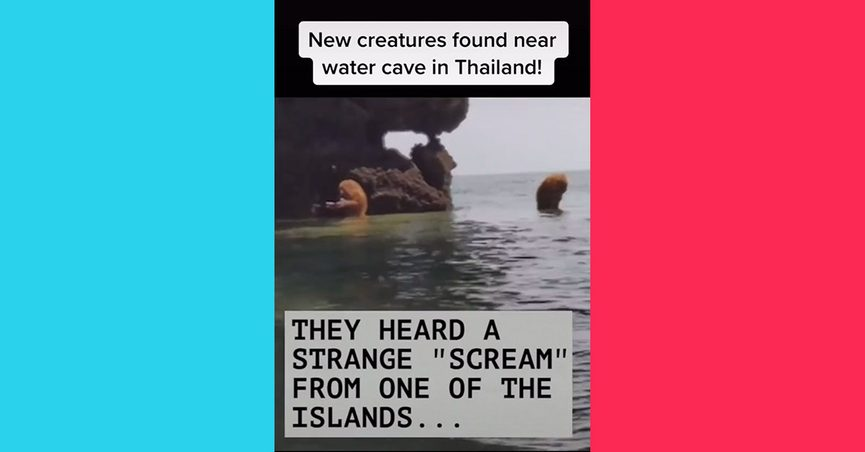 A TikTok video claimed that new creatures were found near a water cave in Thailand.