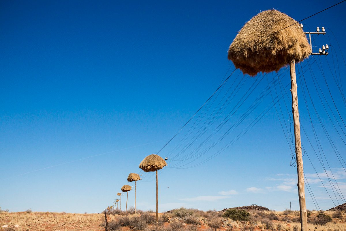 An advertisement showing a huge nest of weaver birds on a telephone pole or power lines purported to show a drone photograph that captures a photo we are not supposed to see.