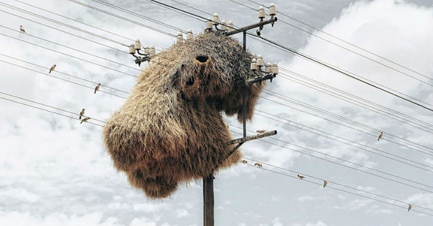 An ad showing a massive weaver birds nest nest on a telephone pole or power lines claimed to show a drone photograph that captures a photo we're not supposed to see.